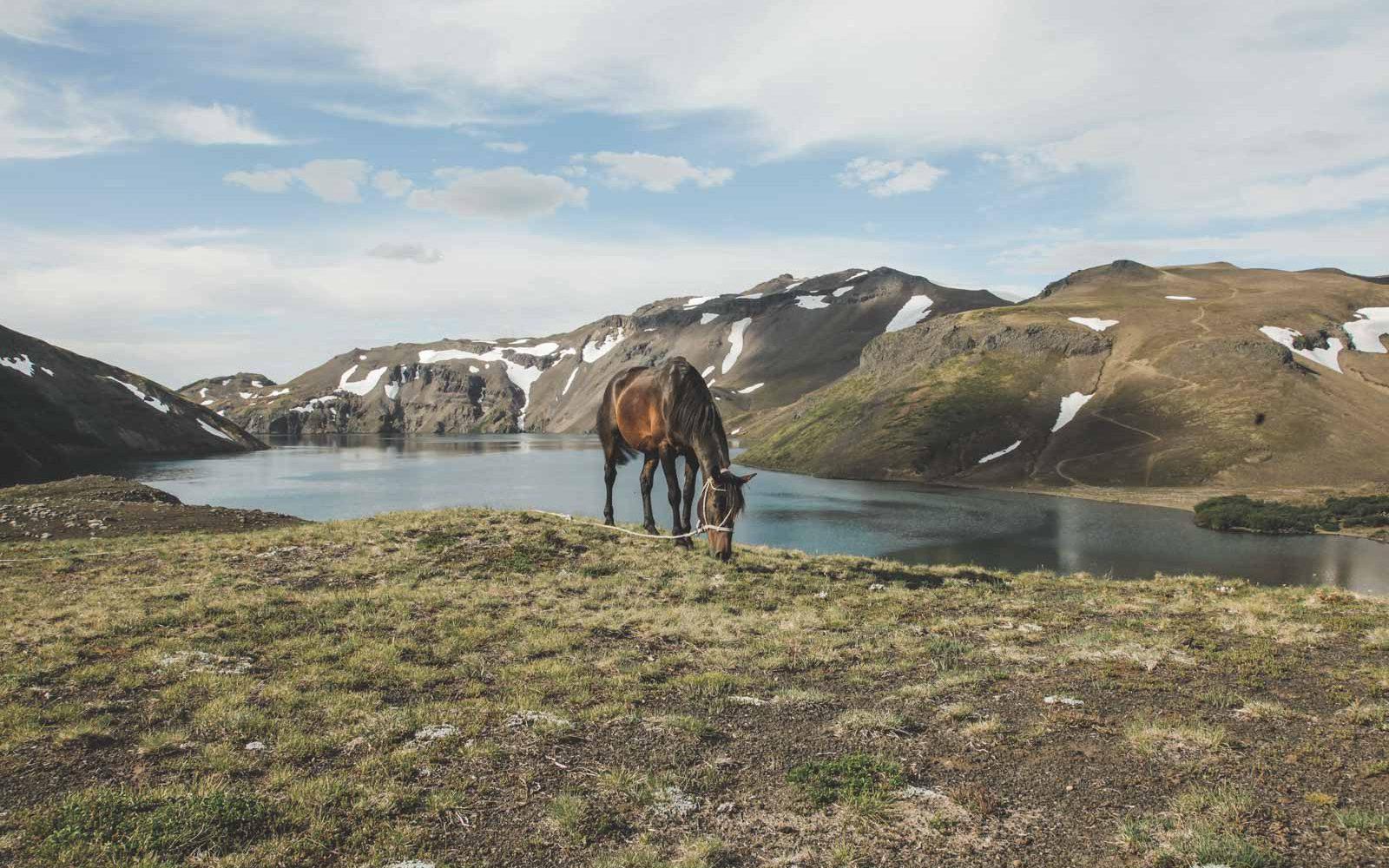 Urlaub zu Pferd in Pucon - Chile