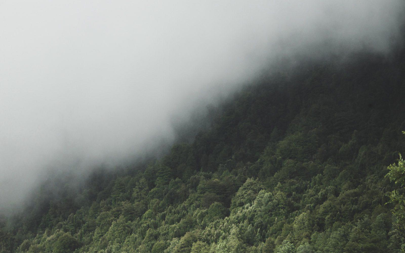 kalter valdivianischer Regenwald Pucon
