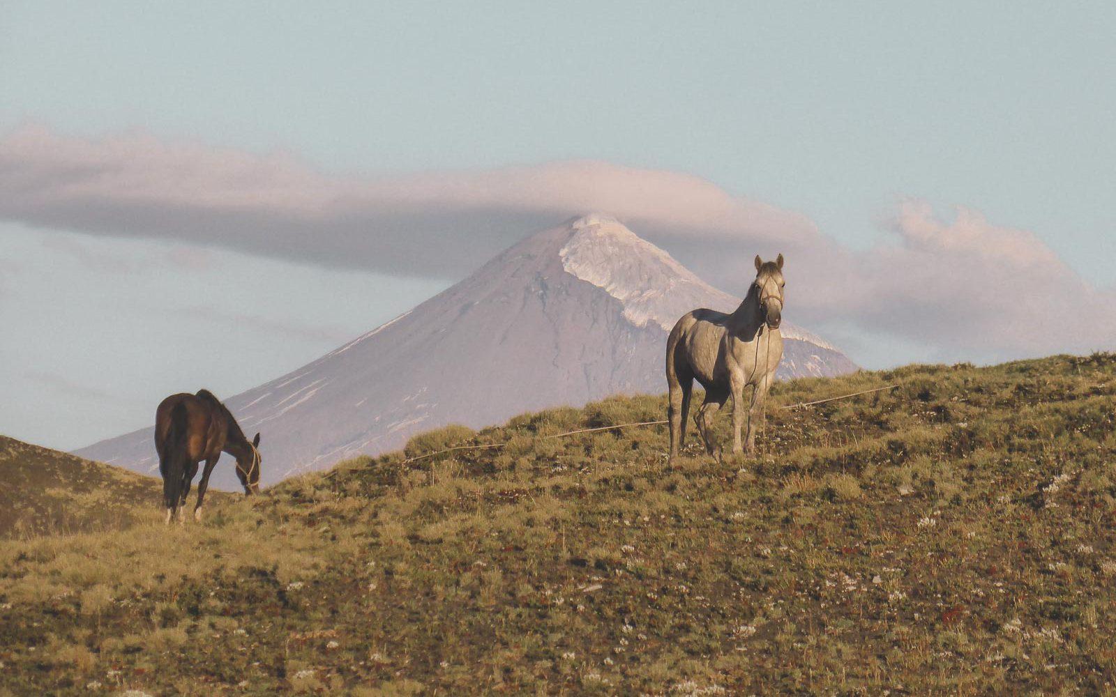 Trailride vor dem Lanin Vulkan an der chilenisch argentinischen Grenze