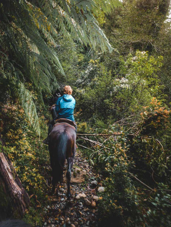 rancho-carhuello-rain-forest-horseback-riding