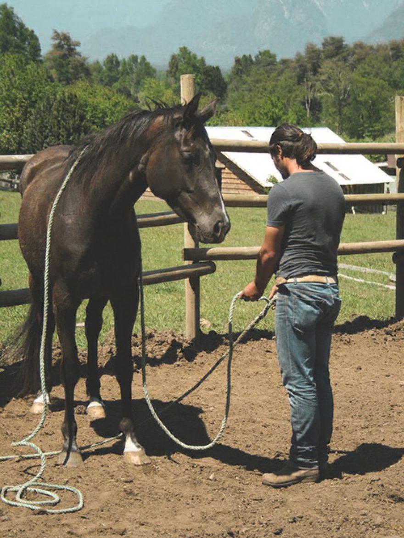 Natural Horsemanship Rancho Carhuello
